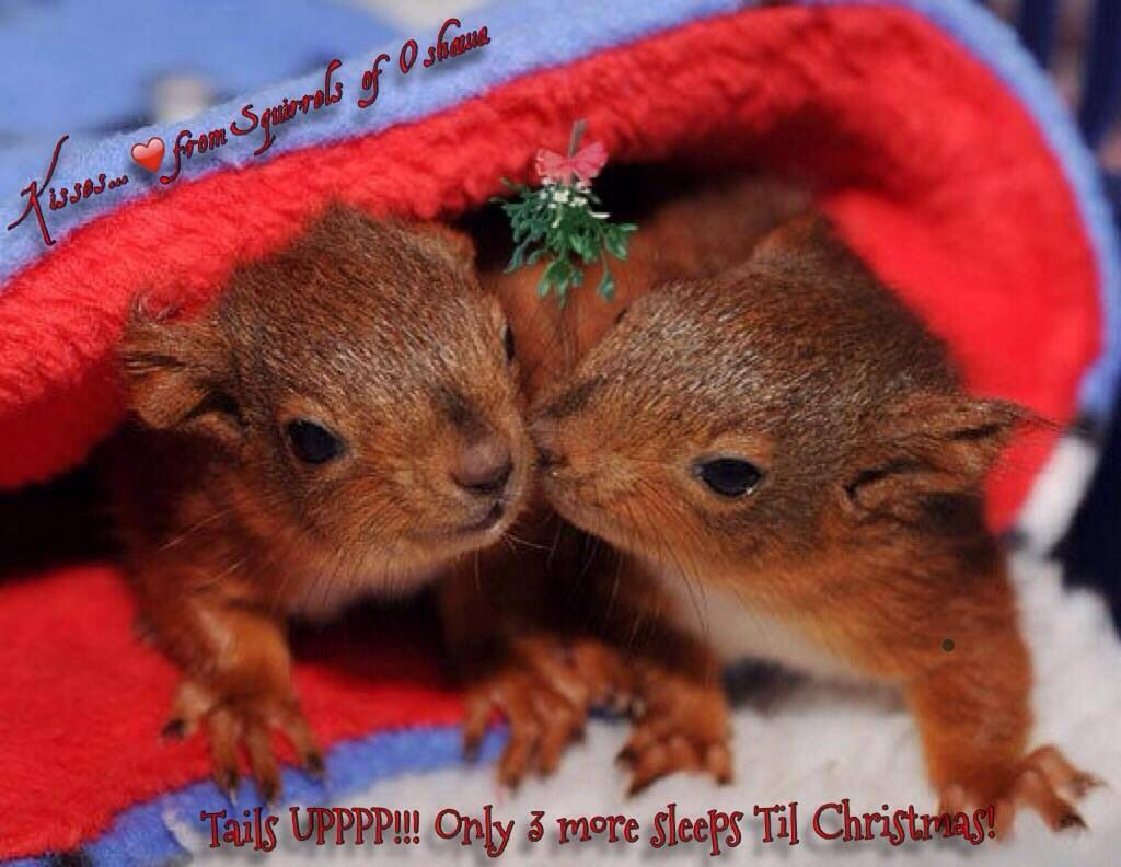 Merry Christmas Baby Animals Pinterest