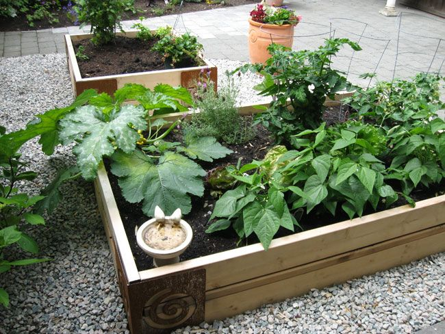 Vegetable Garden Photos Raised Vegetable Bed In A 400 x 300