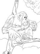 Bornean Orangutan Coloring Page Animal Drawings Animal Coloring