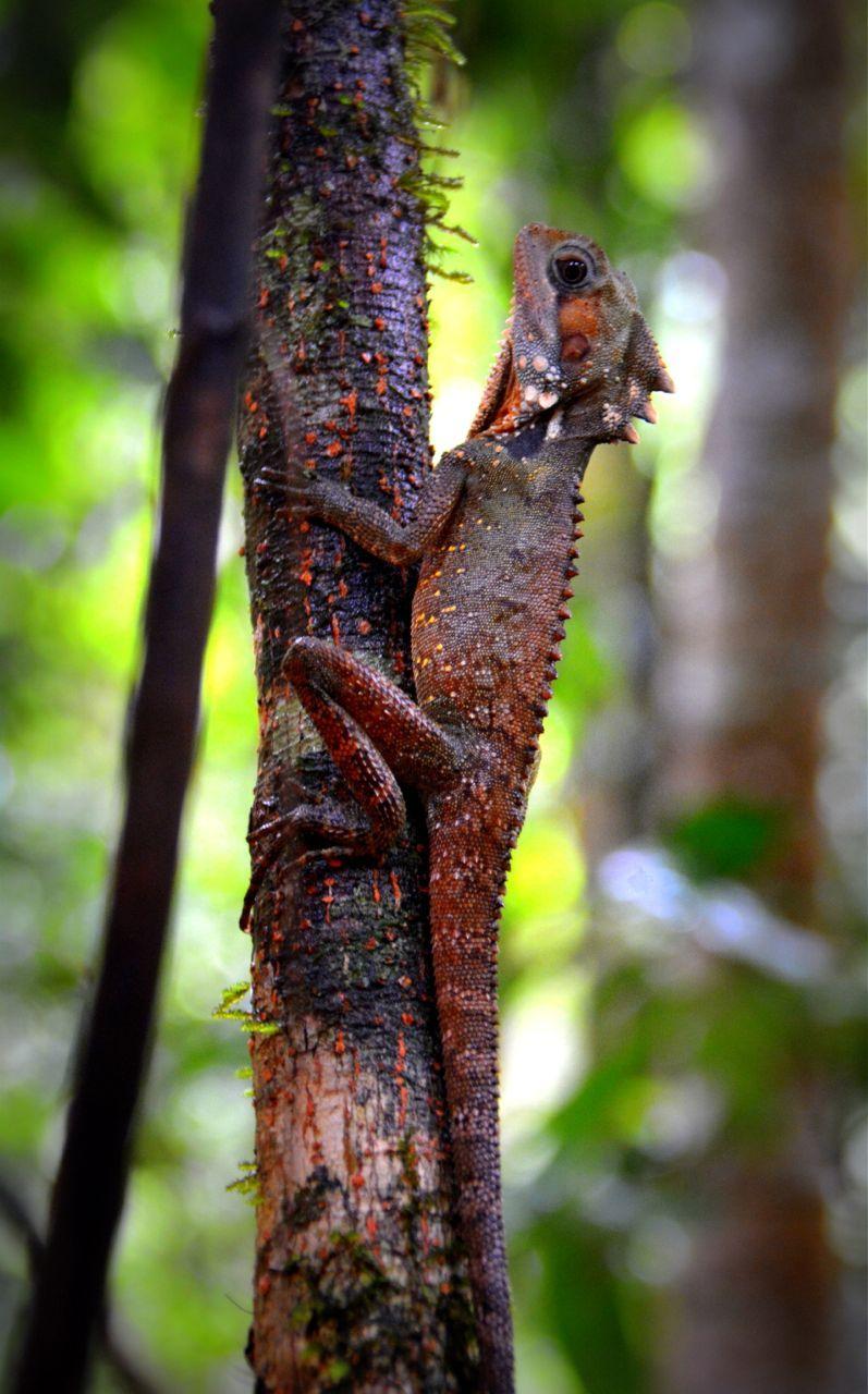 Daintree Rainforest, Australia (With images) Rainforest