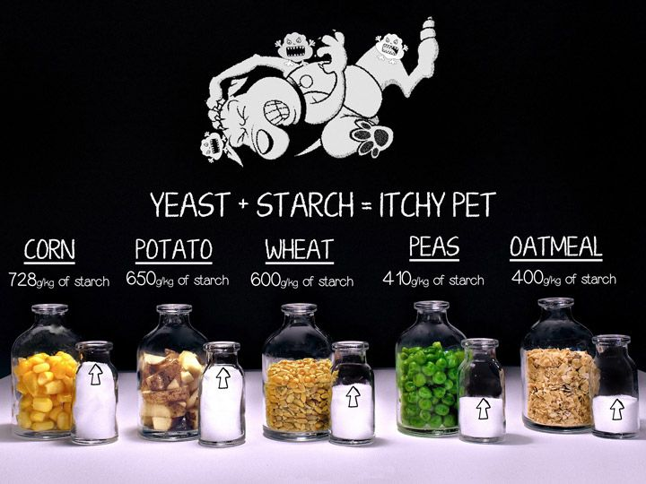 Grain Free Dog Foods Solving Yeast And Skin Issues Grain Free