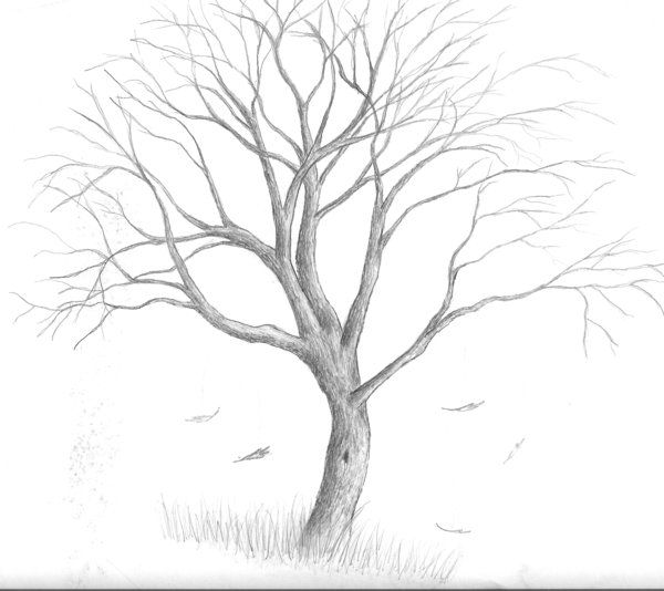 Tree Drawing | Tree Drawings Tumblr Tree By Clay Mation