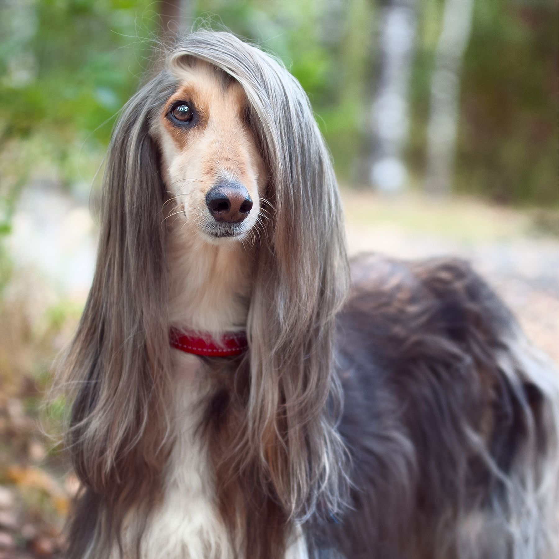 When Your Dog S Hair Looks Better Than Yours Hairgoals