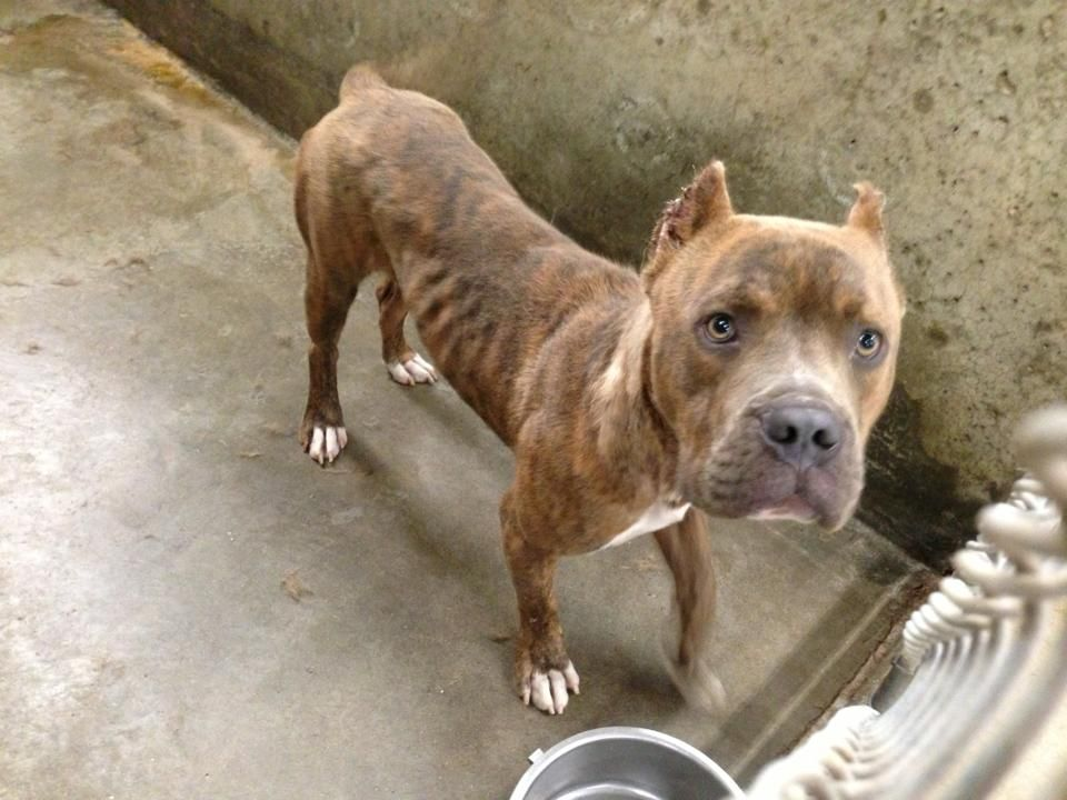 04 16 17 Odessa Tx Extremely Urgent William Is A Male 1 2