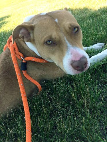Hi there! My name is Gucci! I am a 2yearold, female