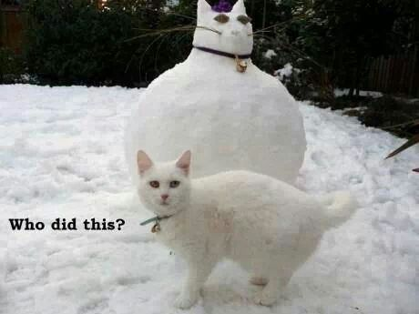 Lol actual kitty looks not pleased.
