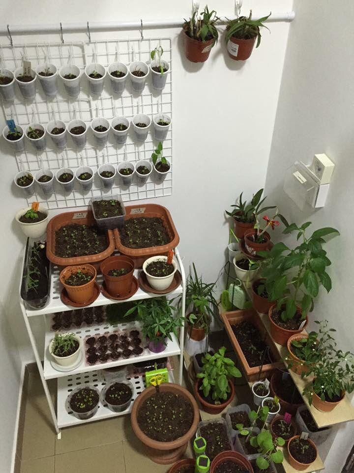 Flower Garden Ideas Wisconsin gardening w daiso | great value! daiso & tokutokuya & japan home