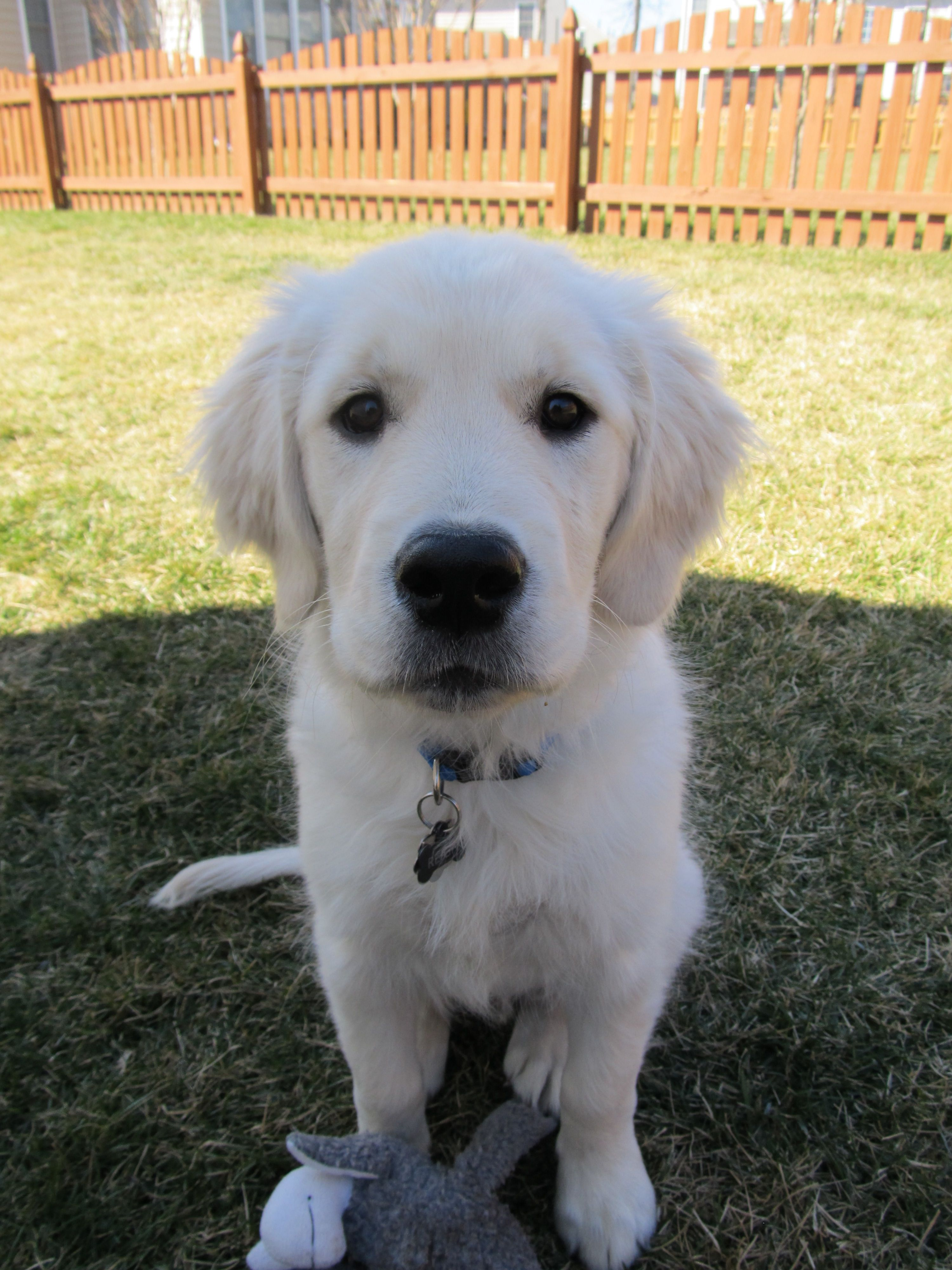 Reign 4 months Puppies for sale, Dog training near me