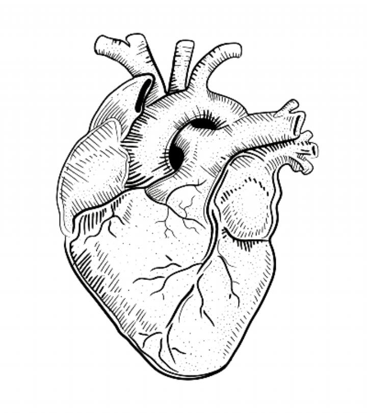Human Heart Illustration Stock Vector Ad Heart Human Illustration Vector Ad Drawings Human Heart Drawing Heart Illustration Human Heart