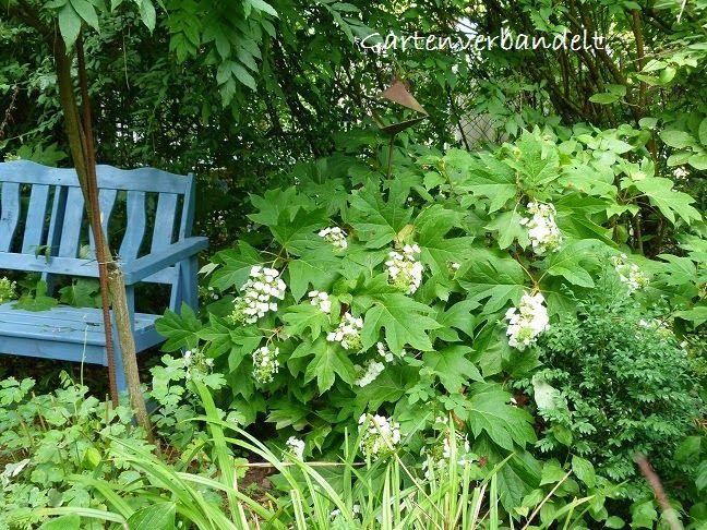 Gartenverbandelt: Juni 2014