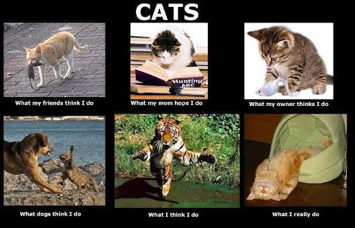 Cats-What-My-Friends-Think-I-Do