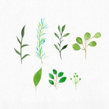 watercolor leaves png bilder   vektoren und psd dateien   kostenloser download auf pngtree in