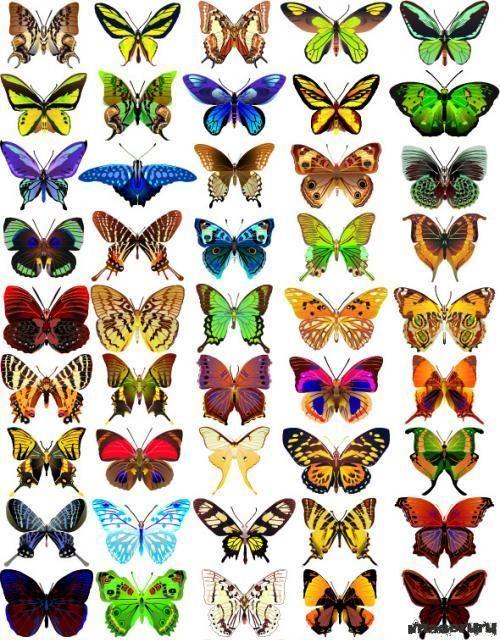 muchas mariposas de colores - Buscar con Google   MARIPOSAS ...