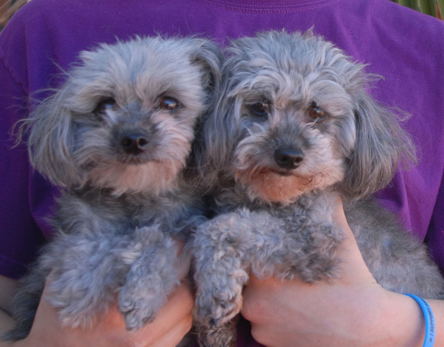 Please help find a wonderful home for Amy & Miley, a