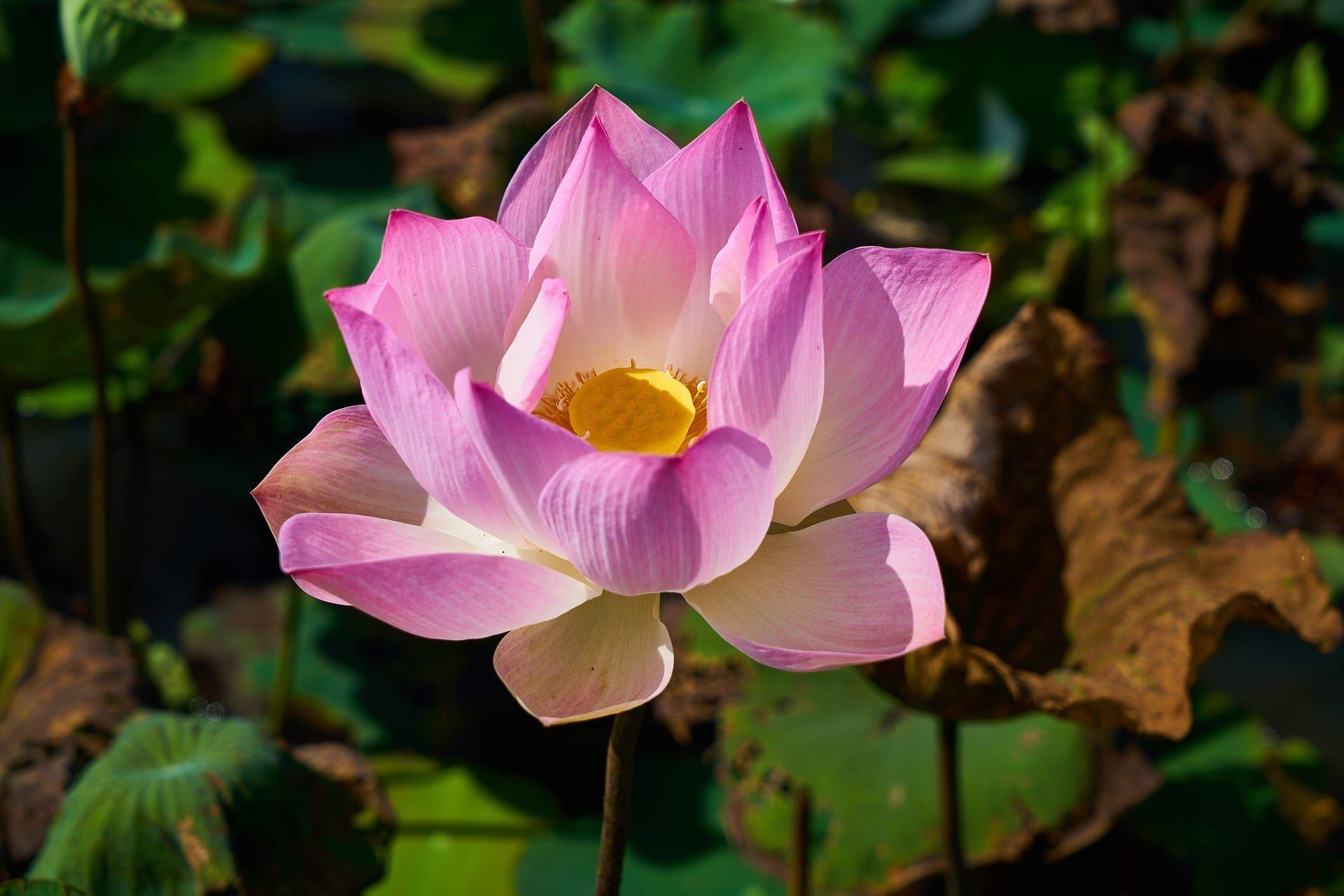 Tropical Gardening Gardening In The Tropics Flower