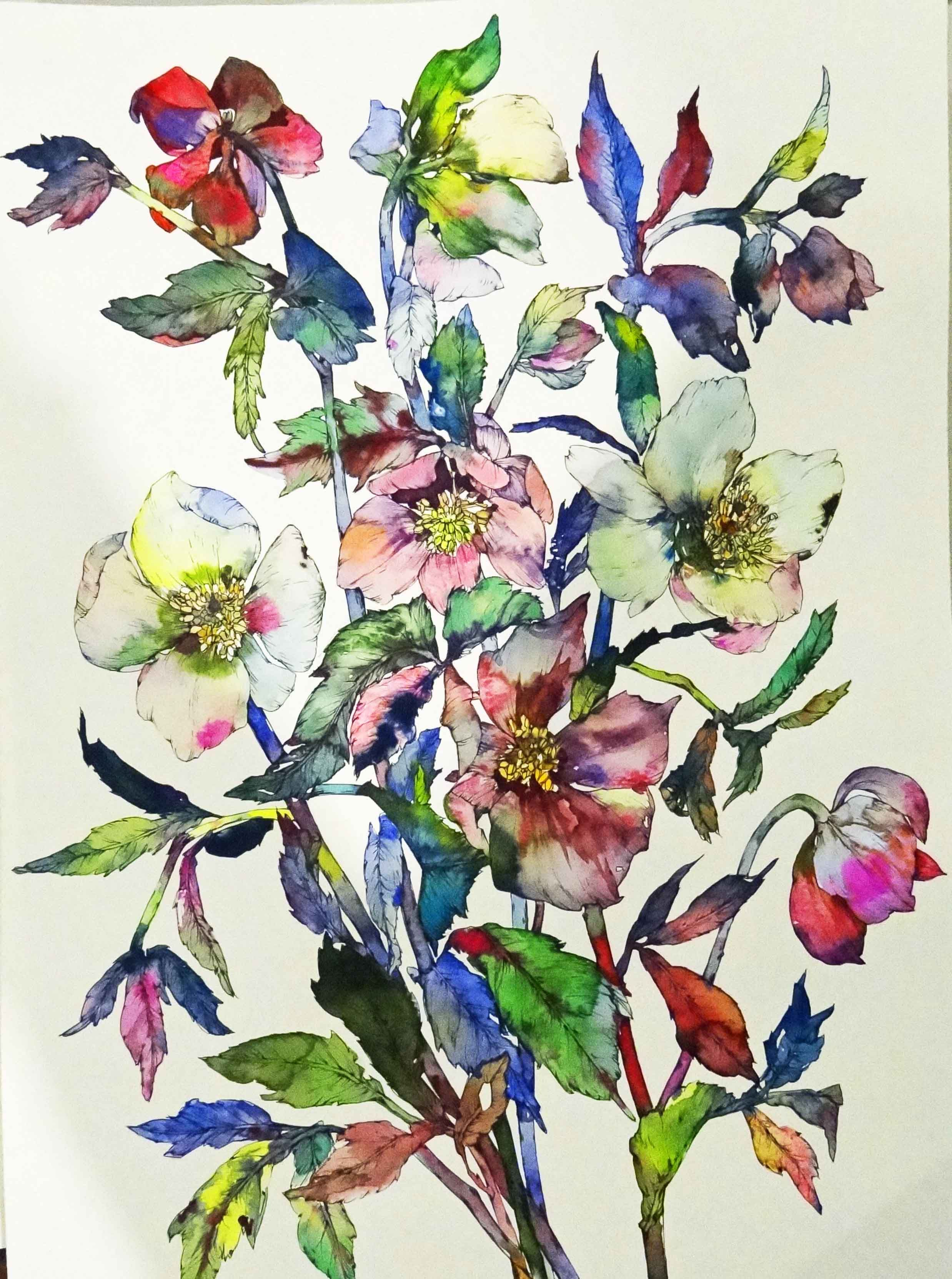 Hellebore By Sophia Marina Miller Plant Painting Botanical