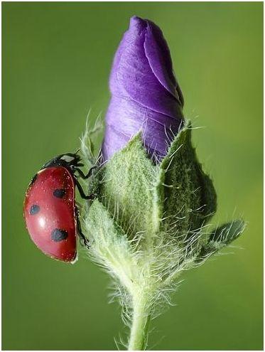 昆蟲 Insect おしゃれまとめの人気アイデア Pinterest Henriette Bluumke ネイチャー てんとう虫 水彩 花