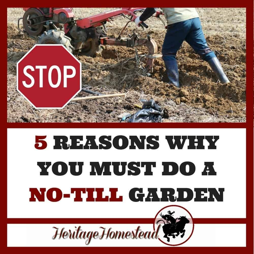 Tilling Backyard: Why You Absolutely MUST Do No-Till Gardening