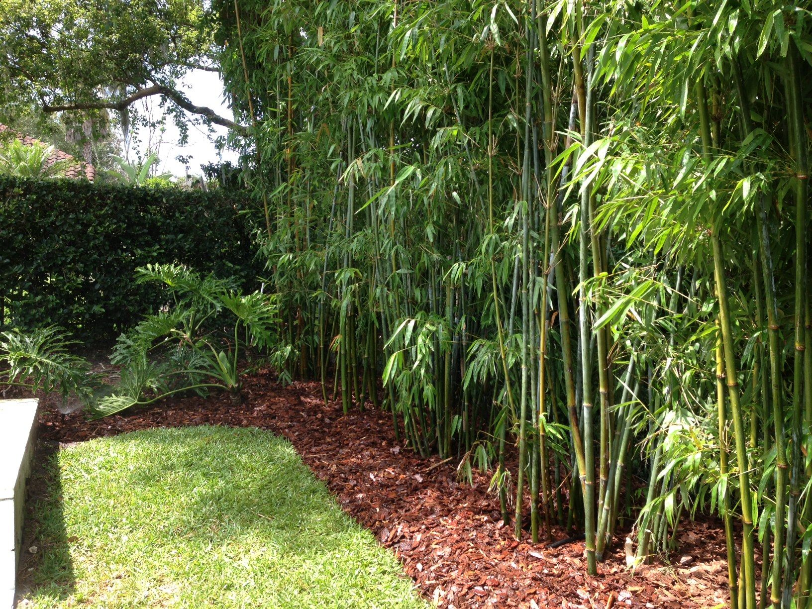 Landscape design bamboo irrigation design blg for Garden design ideas with hedges