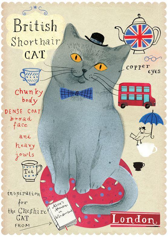 British Shorthair Cat British Shorthair Cats Cat Breeds British Shorthair