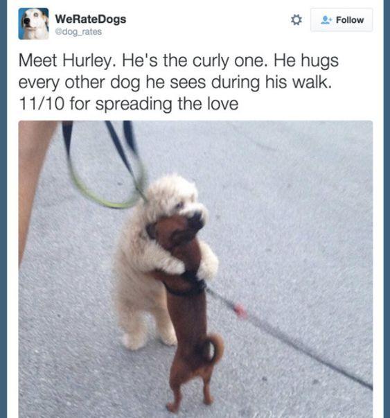 19 Animal Tumblr Posts That'll Make You Feel Better, I Swear