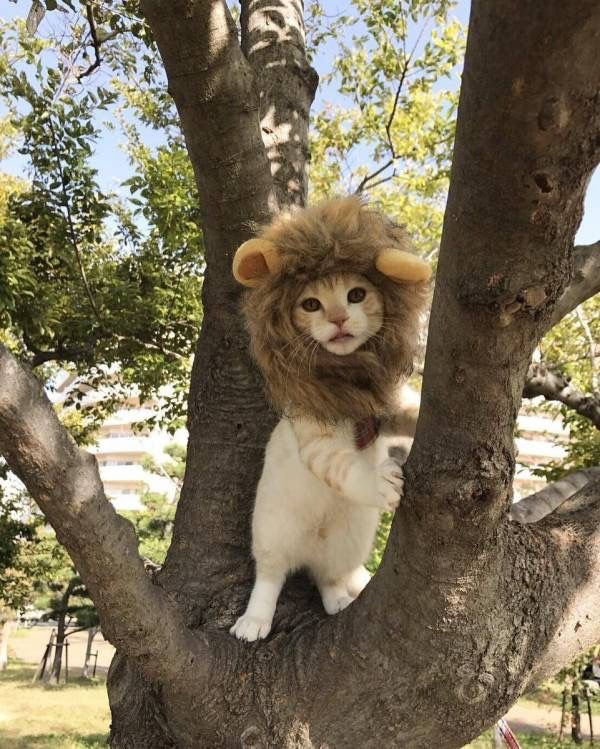 The cutest lion in the world!(╹◡╹)♡