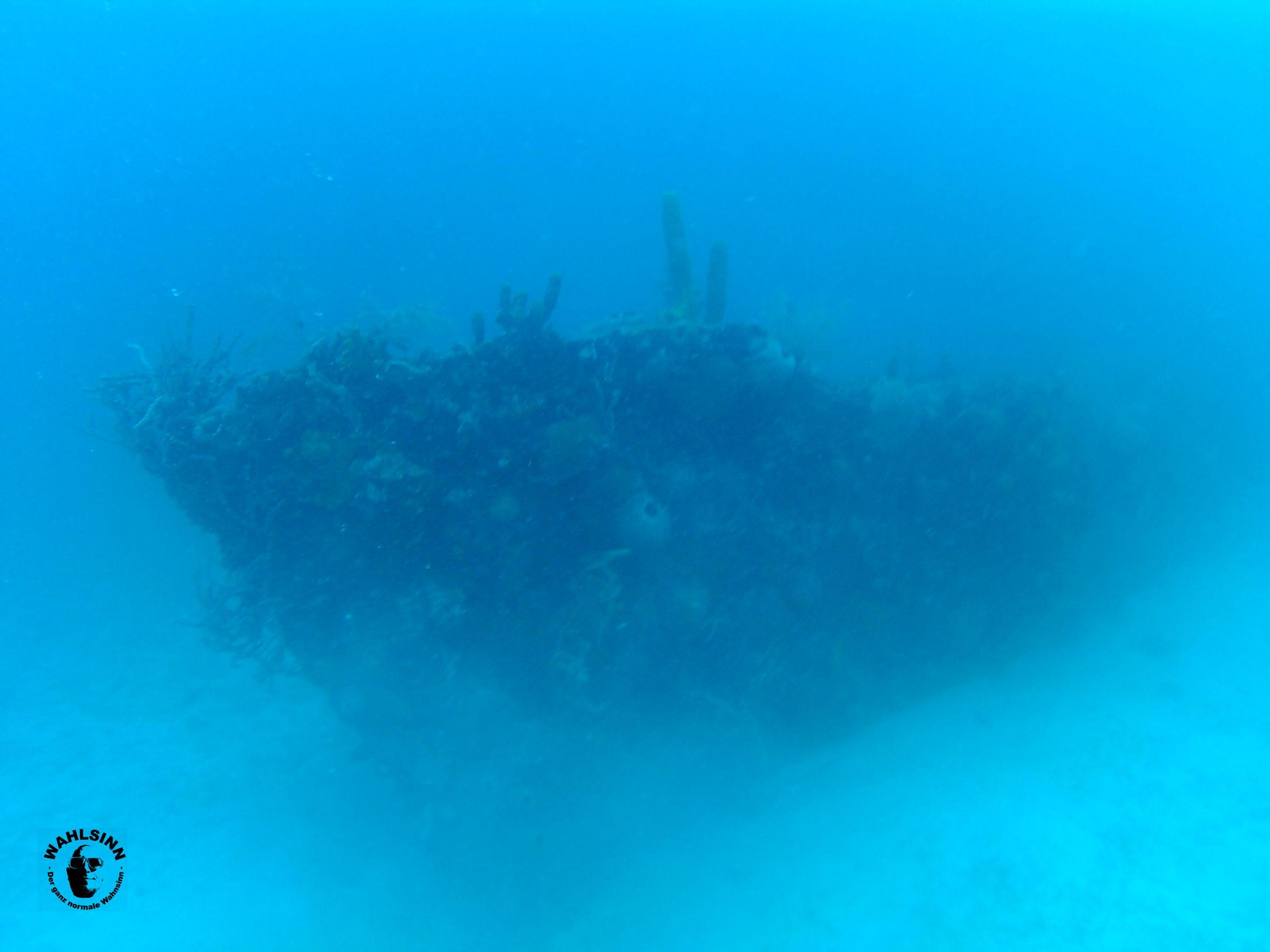 Barbados - Die Unterwasserwelt hat gute sichtweiten, viele schöne Korallen und klasse Wracks