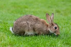 rabbit high resolution - Google Search