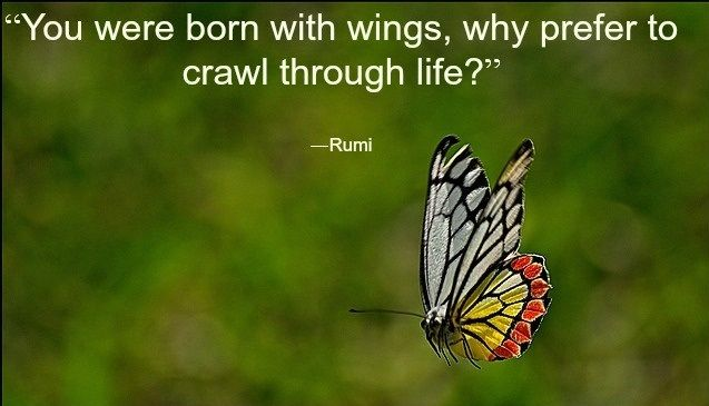 Rumi This Butterfly Was A Favourite As A Lil Girl Ruby N Me We