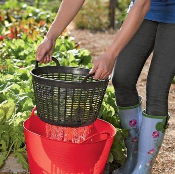 Tub and laundry basket for cleaning veggies then use the water on plants