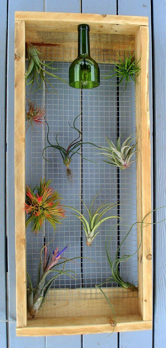 DIY wall mounted air plant frame with light Air plants