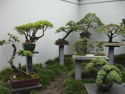 17 Best 1000 images about Bonsai on Pinterest Gardens Trees and