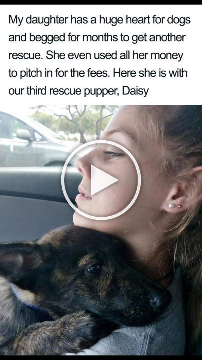 Meme My Daughter Has A Huge Heart For Dogs And Begged For Months To Get Another Rescue She Even Used All Her Money To Pit Cute Dogs Dog Memes To
