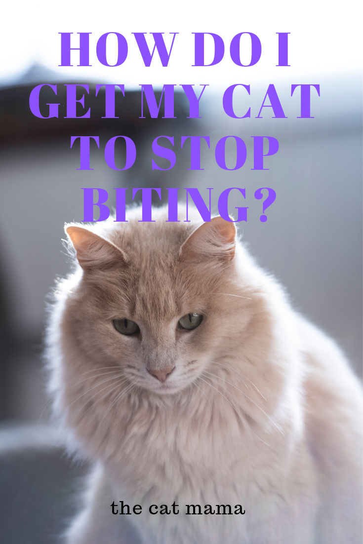 Cat Training Scratching Petting Induced Aggression Is A Pattern Of Behavior In Which The Cat Bites Then Licks When Pe In 2020 Cat Training Cat Training Scratching Cats