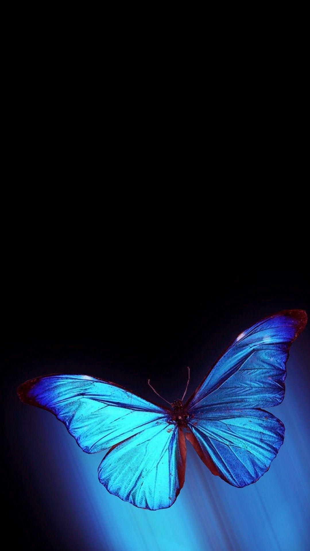 Iphone Wallpaper Hd Blue Butterfly Is The Best High Resolution Screensaver Butterfly Wallpaper Iphone Blue Butterfly Wallpaper Butterfly Wallpaper Backgrounds