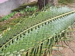 Coconut Plant Leaves Thatched Roof Simplicity Is Beauty
