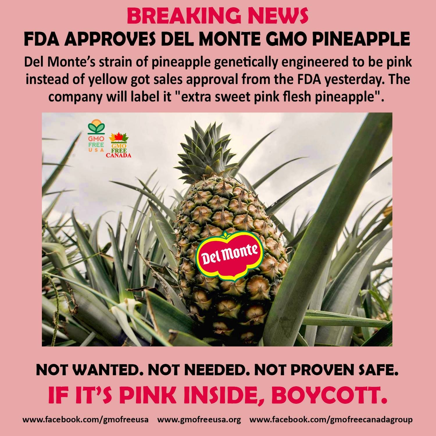 A New Pink Genetically Engineered Pineapple Is Safe The Fda Says Gmo Facts Toxic Foods Gmo Foods
