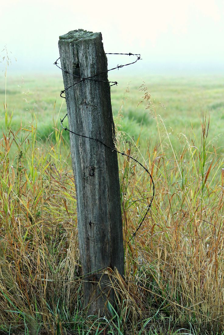 Old Fence Post In Foggy Field Blog Post From Www Thelightlaughed