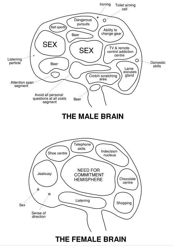 Male & Female Brain funny pictures funny photos