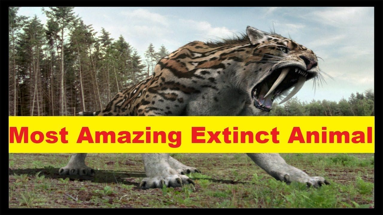 Top 10 Most Amazing Extinct Animal in The World Animals