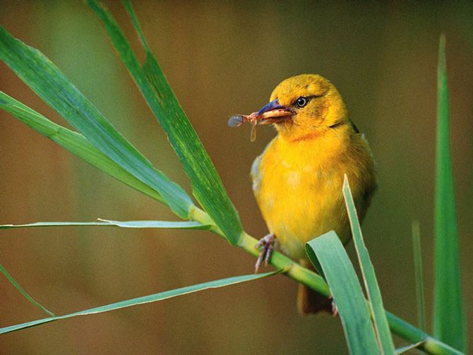 奇妙的鸟类世界 - 湾仔网站
