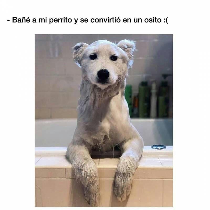 Pin De Giovanna En Memes V Memes Perros Memes De Perros Chistosos Mascotas Memes