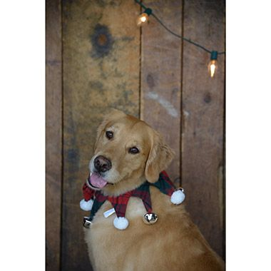 Bailey Bella Plaid Collar With Bells From 5 99 Food Animals Pet Store Pets