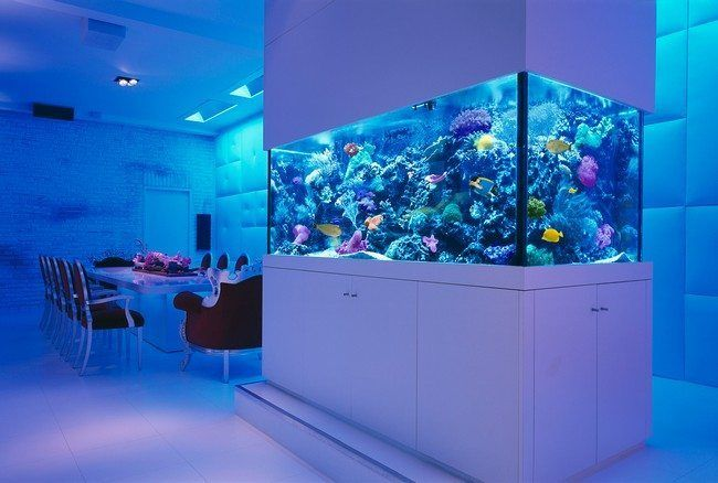 Transform The Way Your Home Looks Using A Fish Tank Fish Tank Design Home Look Fish Tank