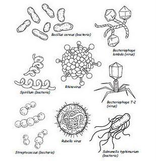 Kindergarten Life Skills Lesson on Germs Life skills