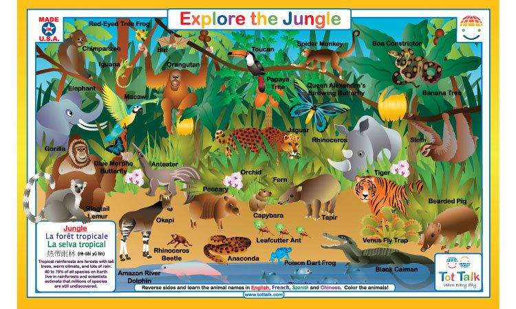 Explore the Jungle Placemat Rainforest activities