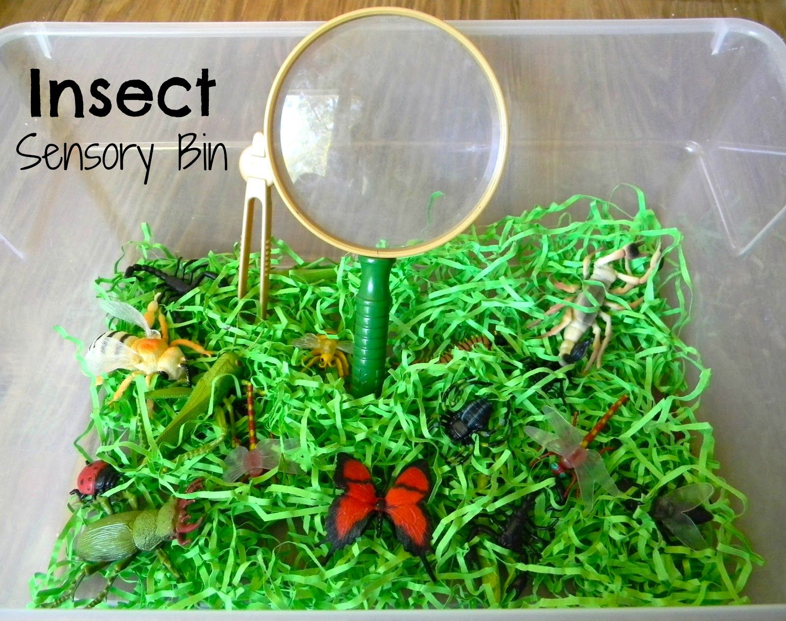 finding the teachable moments insect sensory bin teach