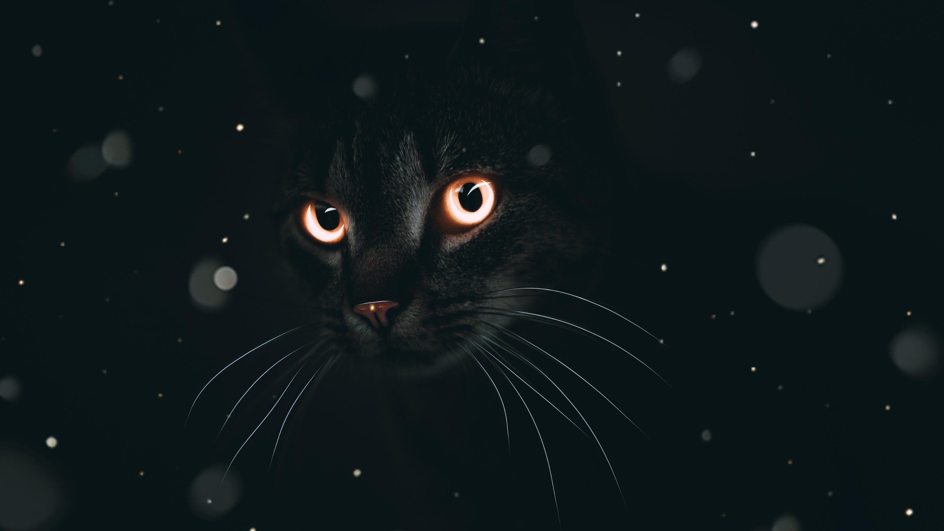 Dark Mode 4k Wallpaper In 2020 Cat Dark Computer Wallpaper Desktop Wallpapers Cats