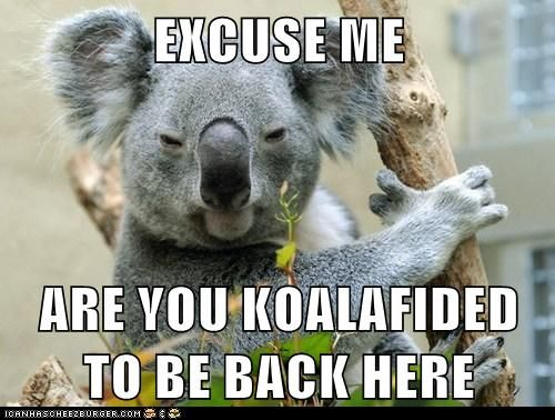 I'm Gonna Have to Ask You to Leave Me to My Napping ...  Funny Koala Memes