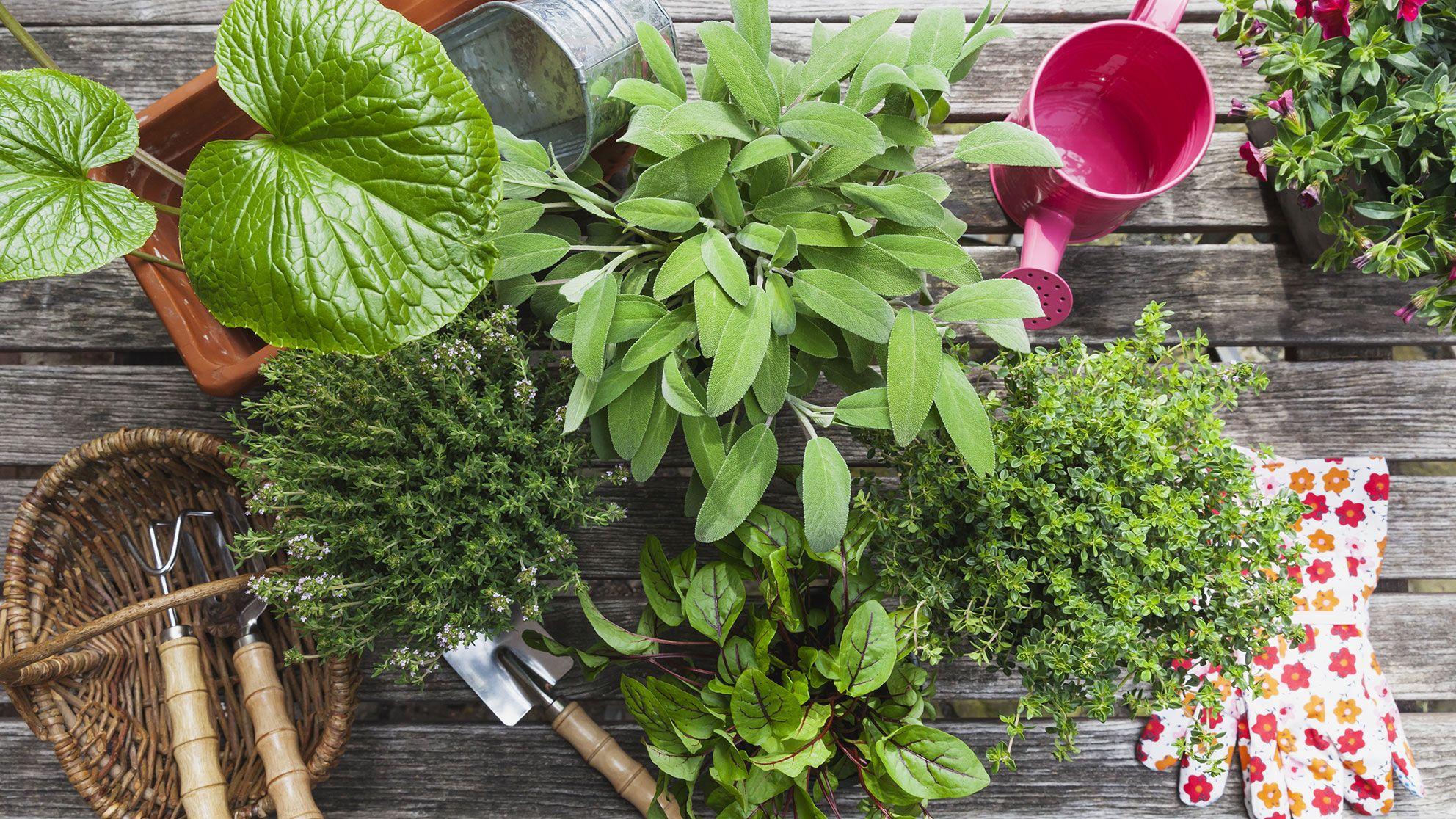 Creer Un Jardin D Herbes Aromatiques Conseils Pour La Cuisine